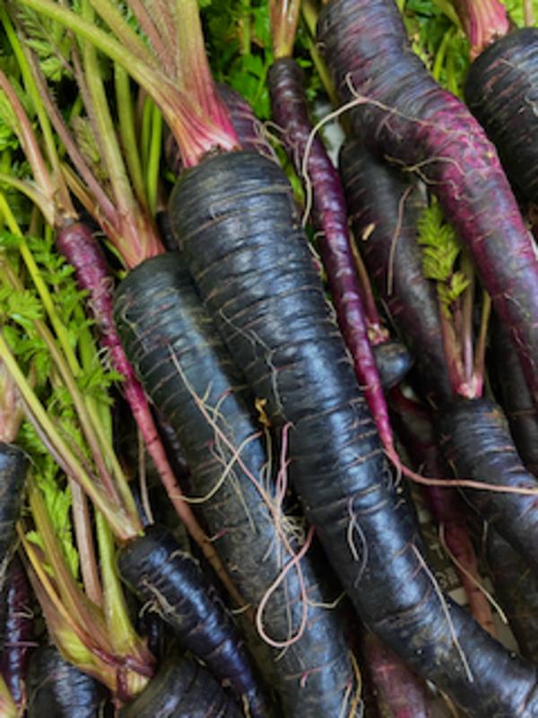 紫色の野菜が好きです−2月のK's農園より